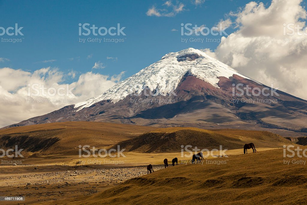 Cotopaxi volcano and wild horses stock photo