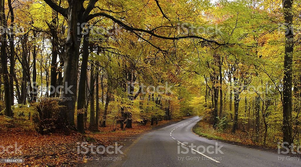 Cotswold Gold royalty-free stock photo