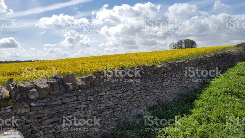Cotswold Stone Wall stock photo