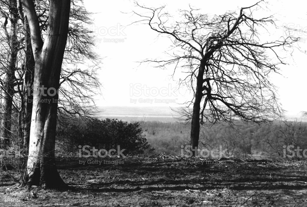 Cotswold Treescape royalty-free stock photo