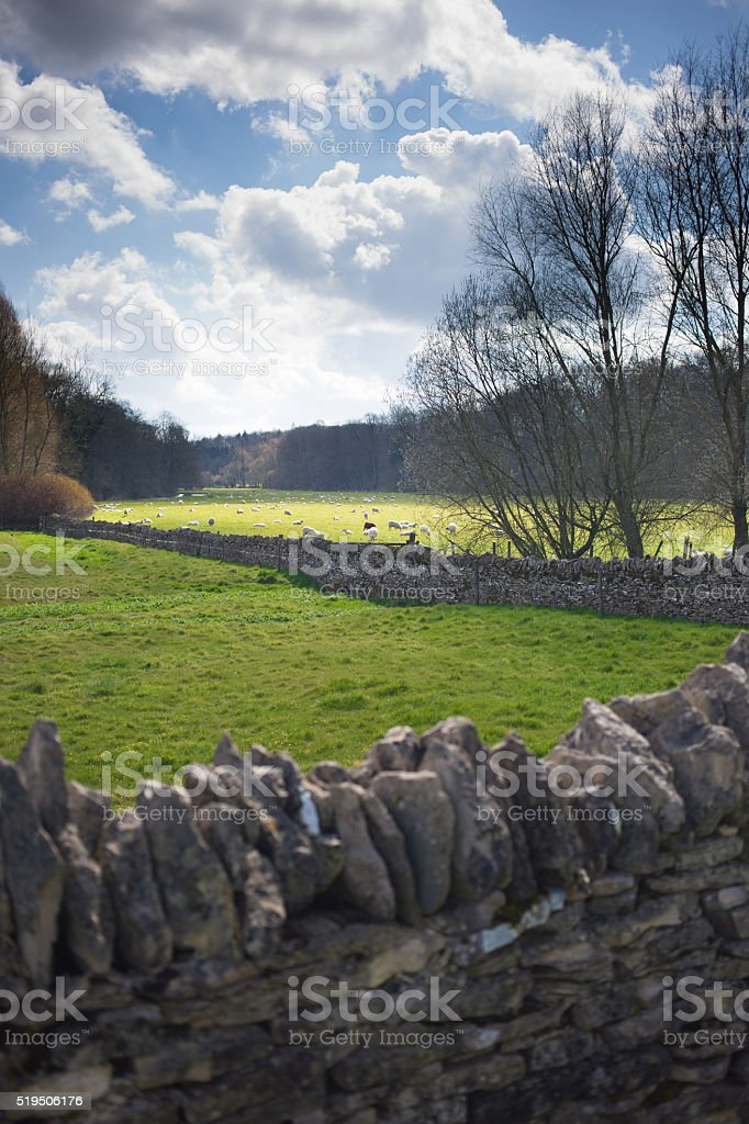 Cotswold view with sheep in the distance stock photo