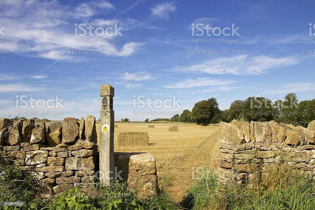 Cotswold Way marker and path through golden field stock photo