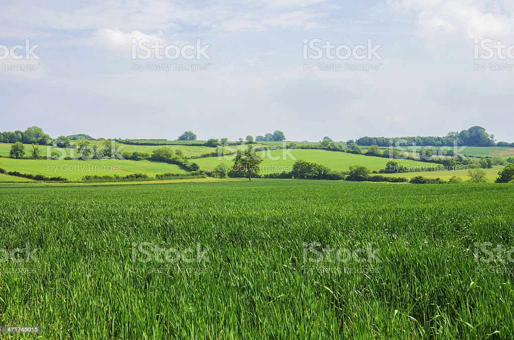 cotswolds royalty-free stock photo