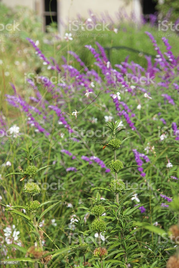 Cottage Garden with floral planting at the end of summer stock photo