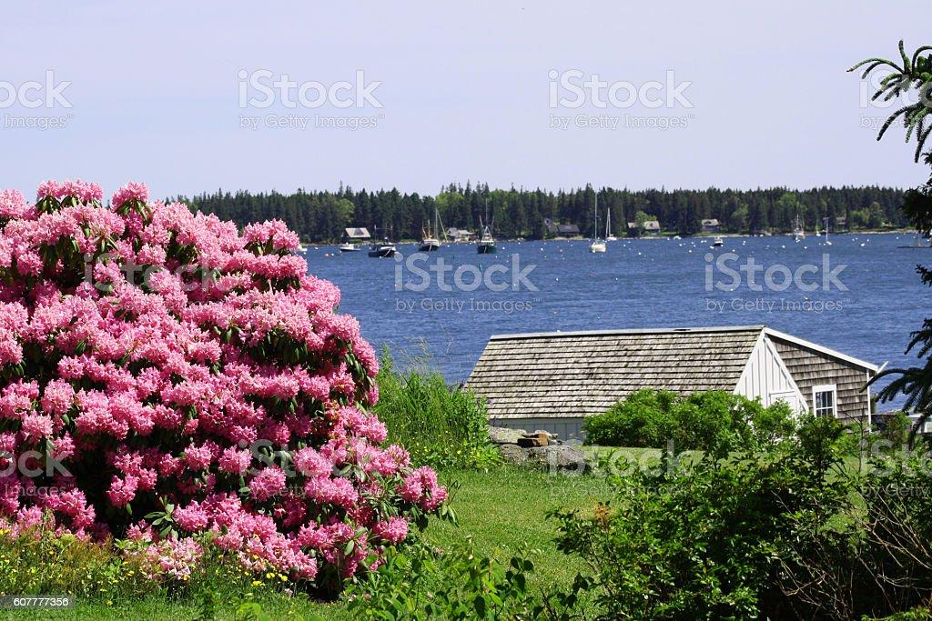 Cottage on the Maine Coast stock photo