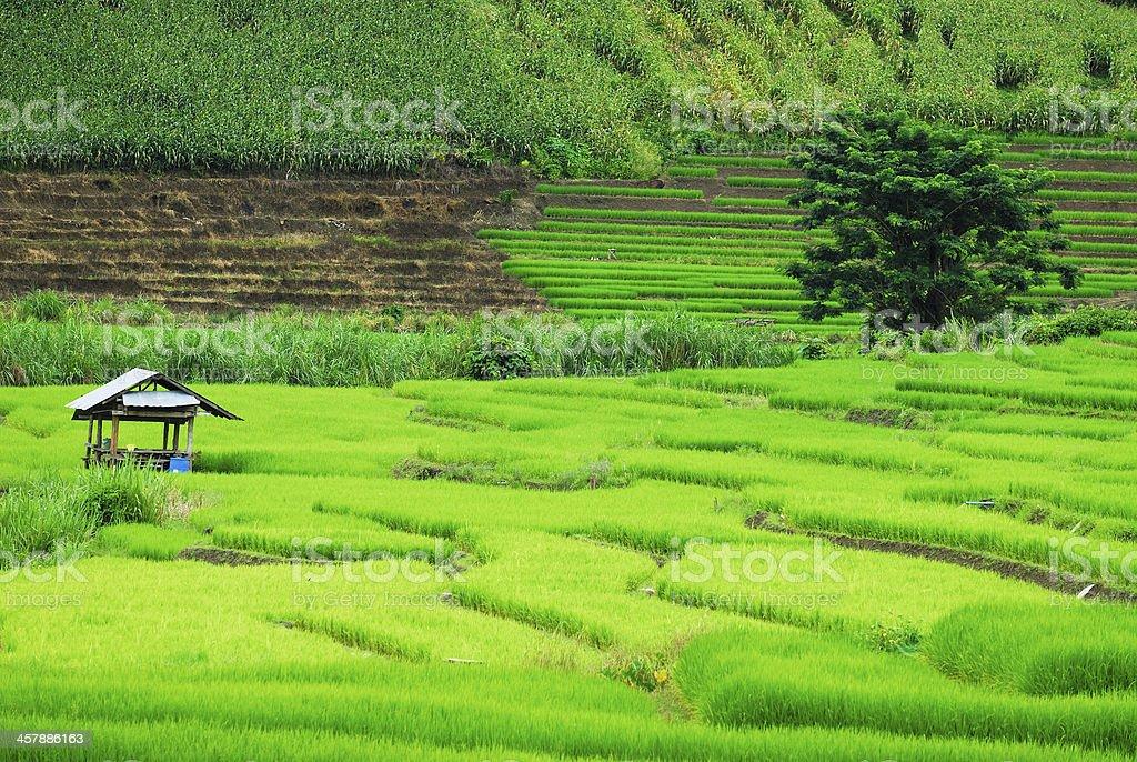 Domek taras pól ryżowych zbiór zdjęć royalty-free