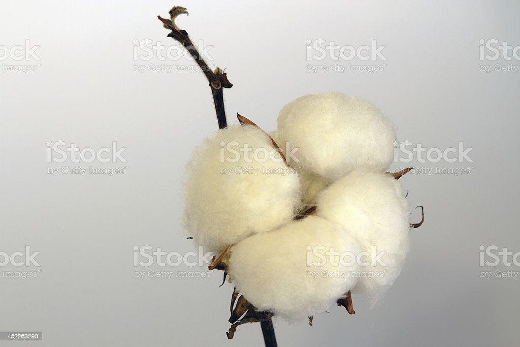 Cotton ball 3 stock photo