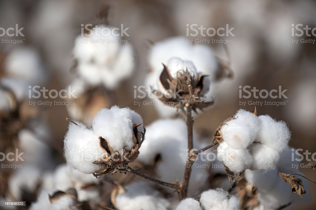 Cotton balls high quality close up stock photo