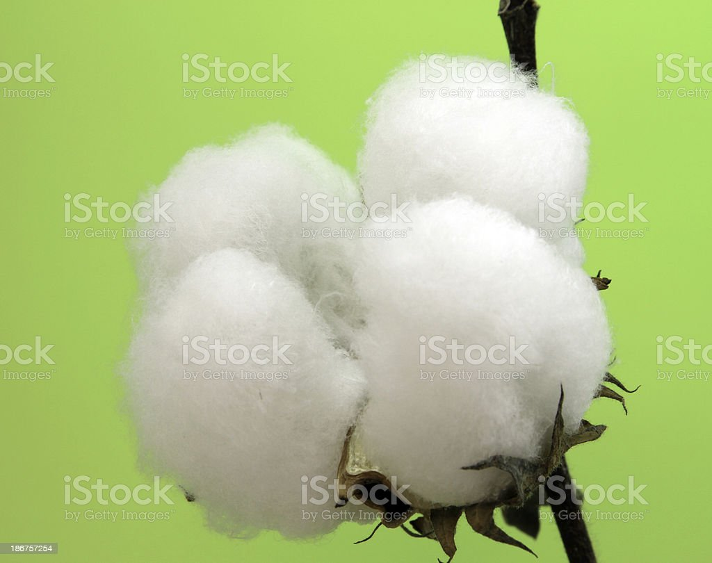 Cotton balls on green background royalty-free stock photo