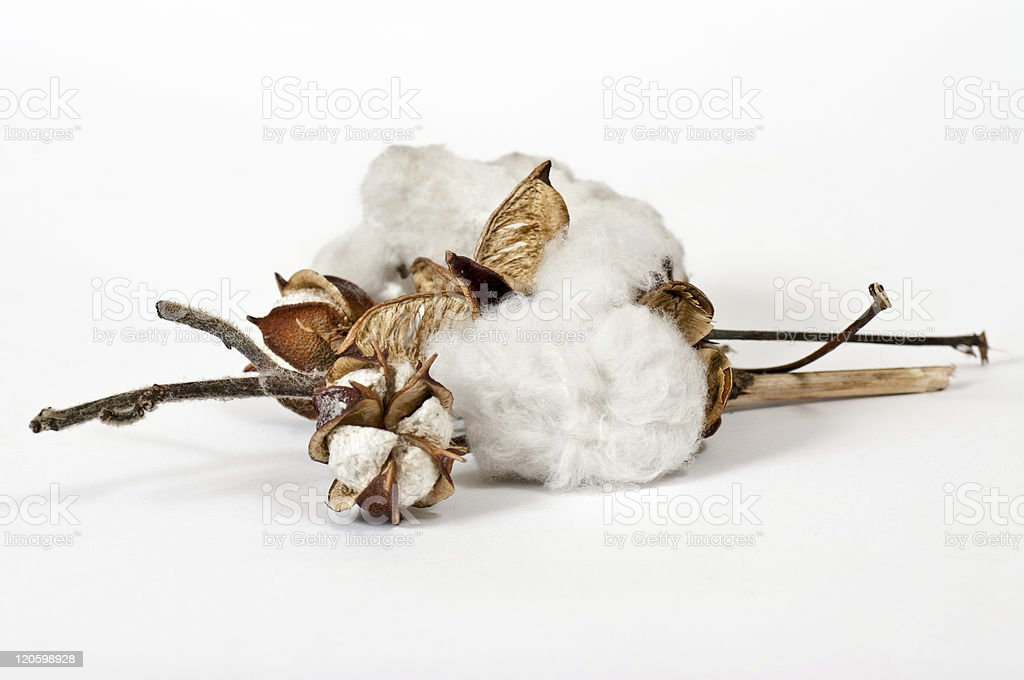 Cotton Balls stock photo