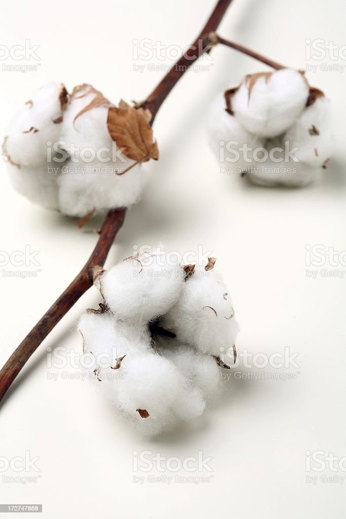 Cotton Balls royalty-free stock photo