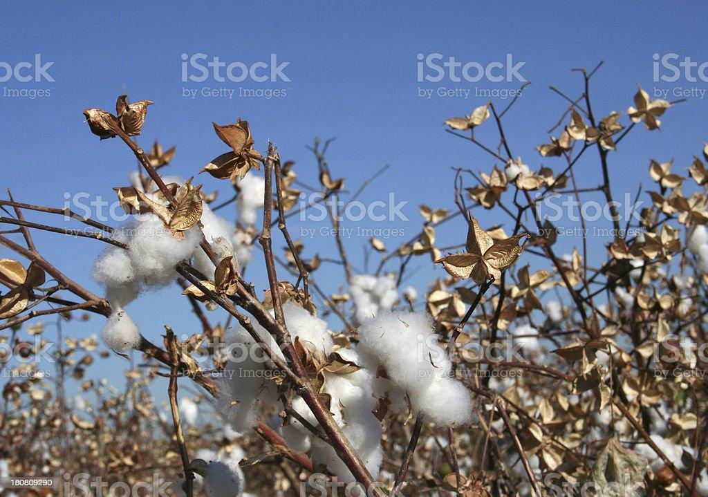 Cotton Blue Sky royalty-free stock photo