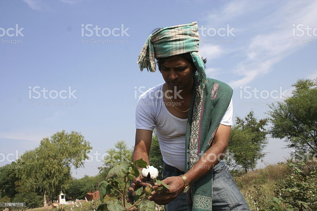 Cotton boll farmer royalty-free stock photo
