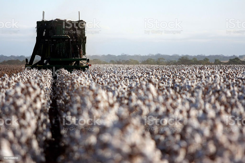 Cotton Harvester stock photo
