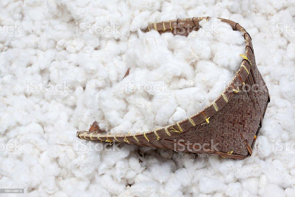 Cotton harvesting stock photo