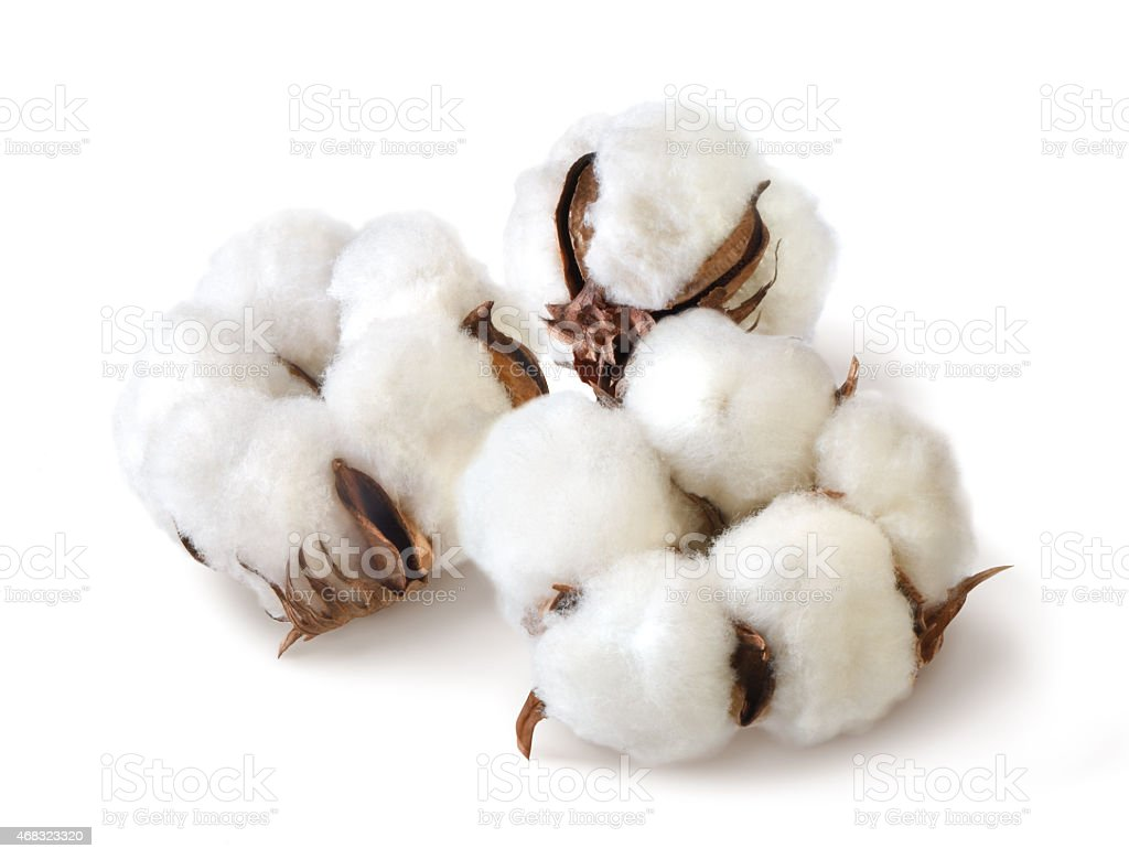 cotton isolated stock photo