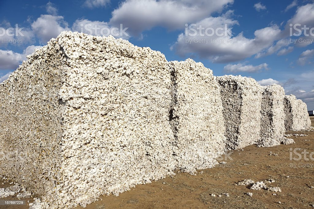 cotton modules in gin yard ready for ginning stock photo