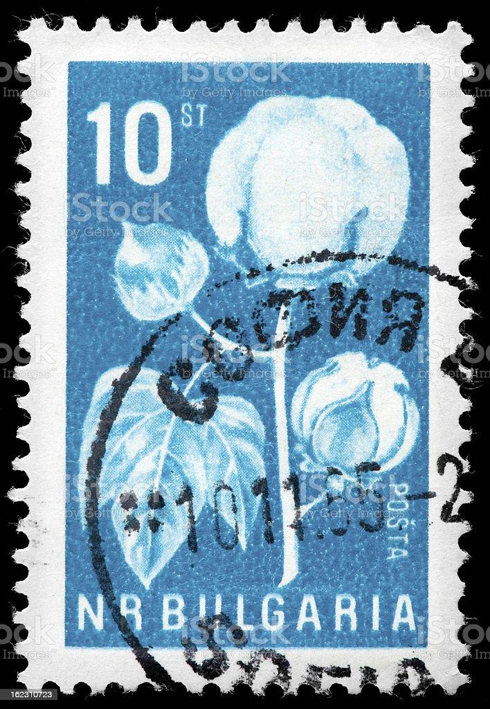 Cotton Plant on Bulgaria Vintage Postage Stamp, White and Blue stock photo