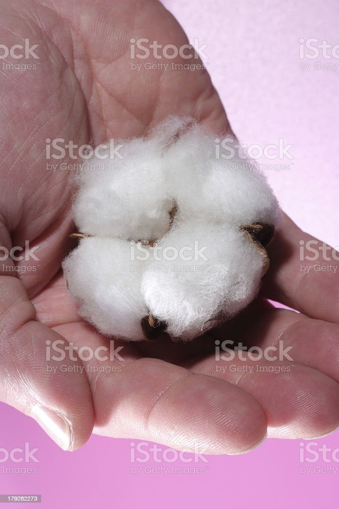 Cotton seed royalty-free stock photo