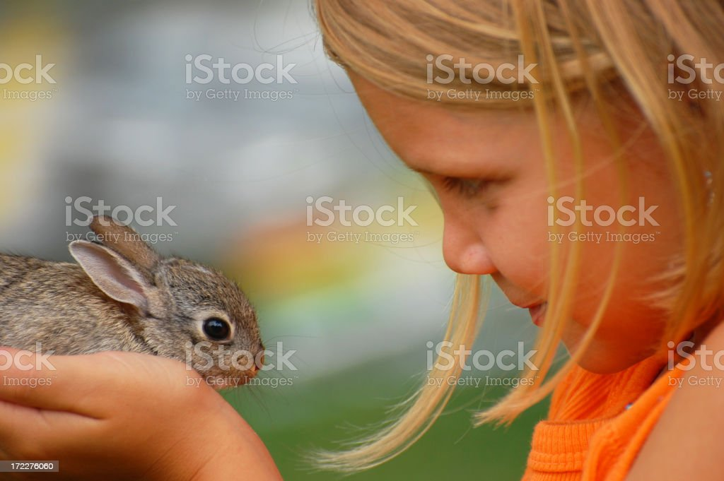 Cottontail Love stock photo