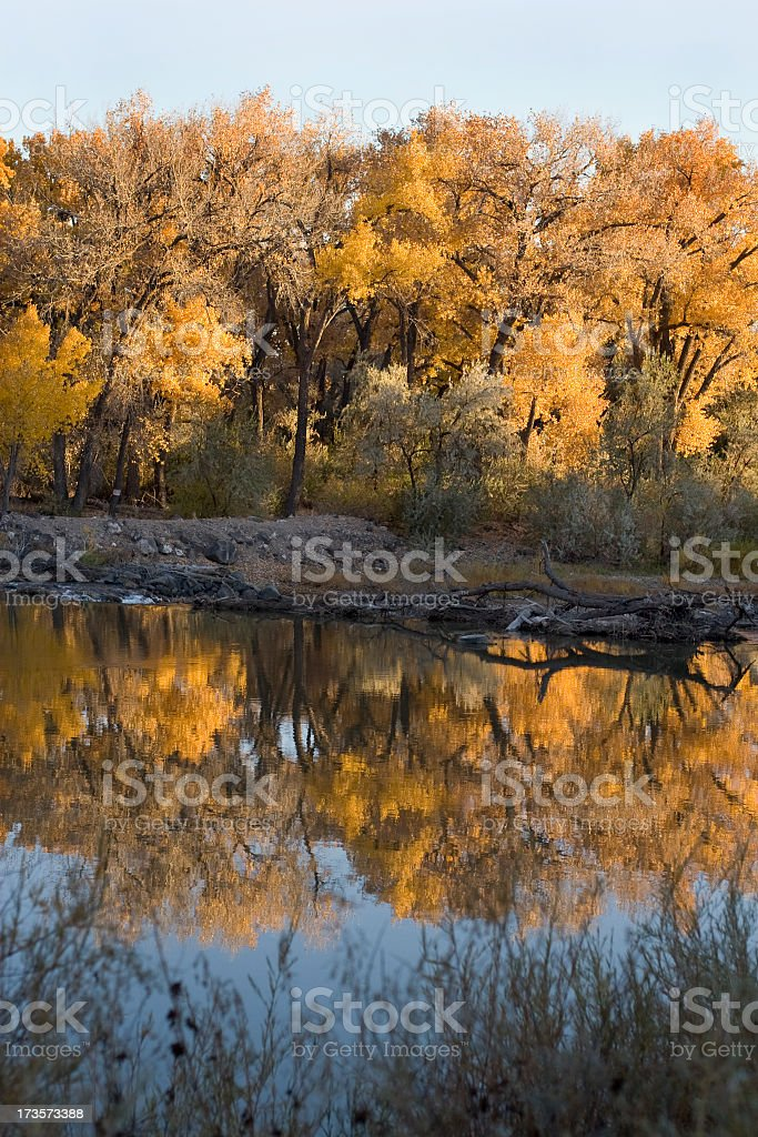 Cottonwood Reflection royalty-free stock photo