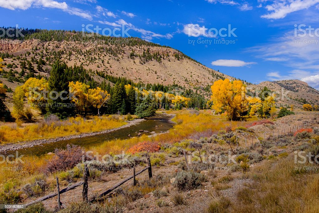Cottonwoods and River in Colorado stock photo