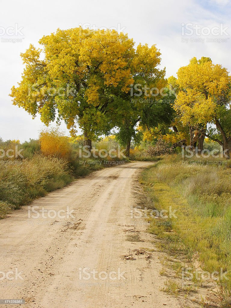 Cottonwoods in the Fall royalty-free stock photo