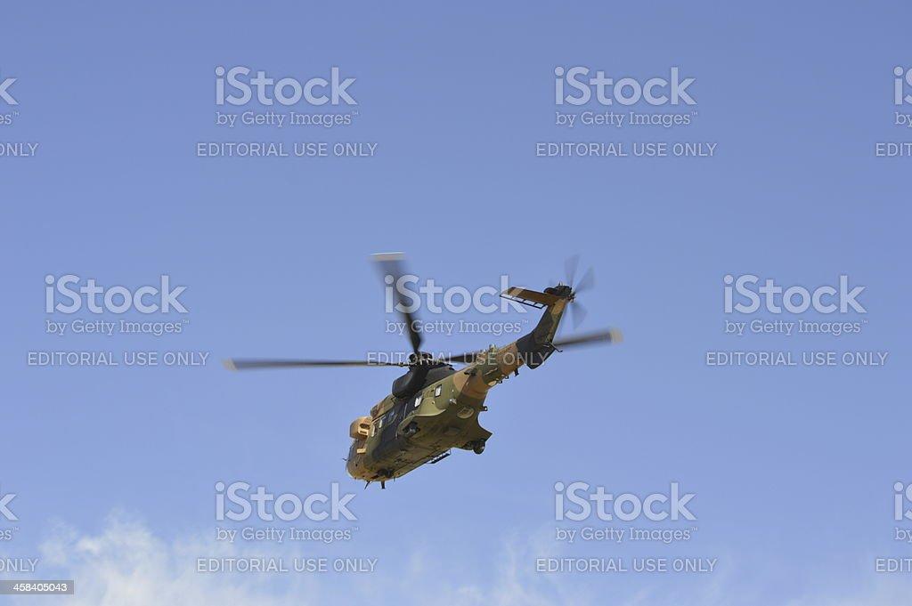 Cougar Flight stock photo