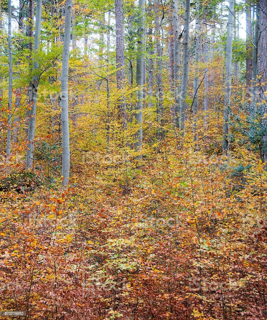 couleurs d'automne stock photo