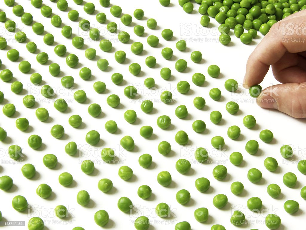 count peas royalty-free stock photo
