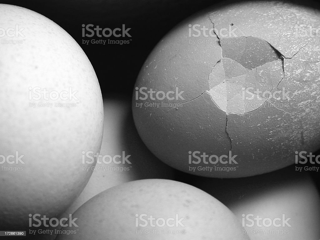 count your chickens royalty-free stock photo