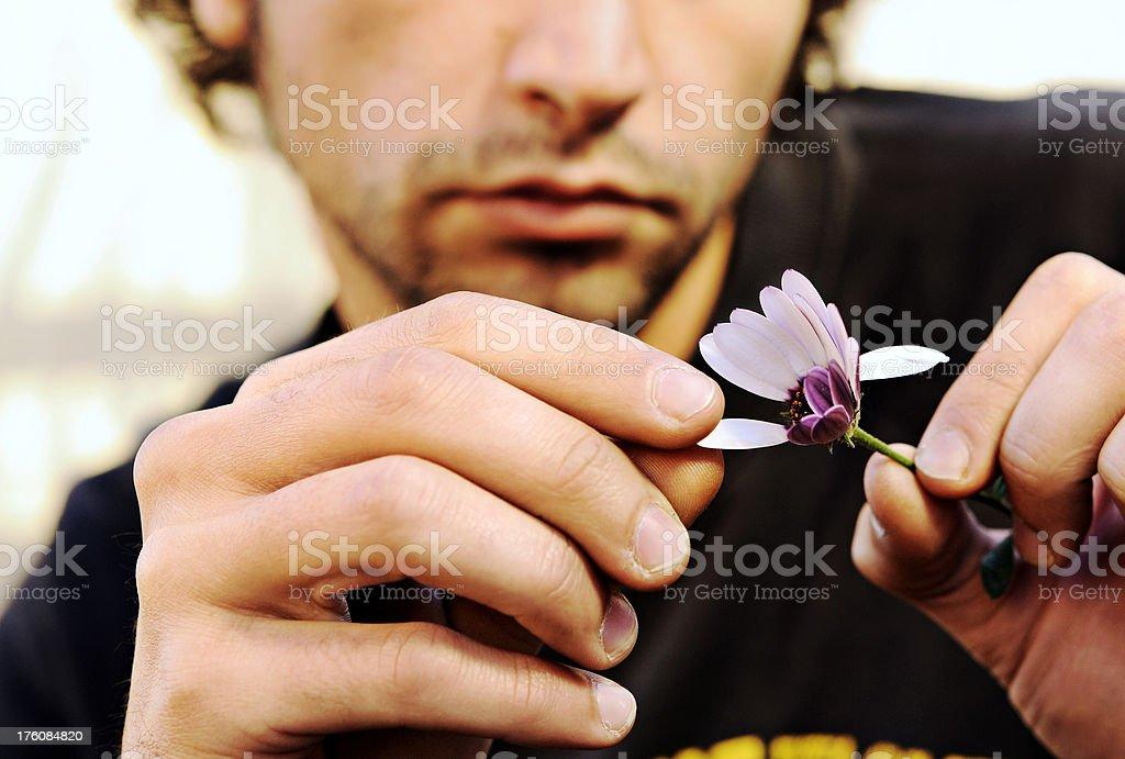 Counting Daisy Petals stock photo