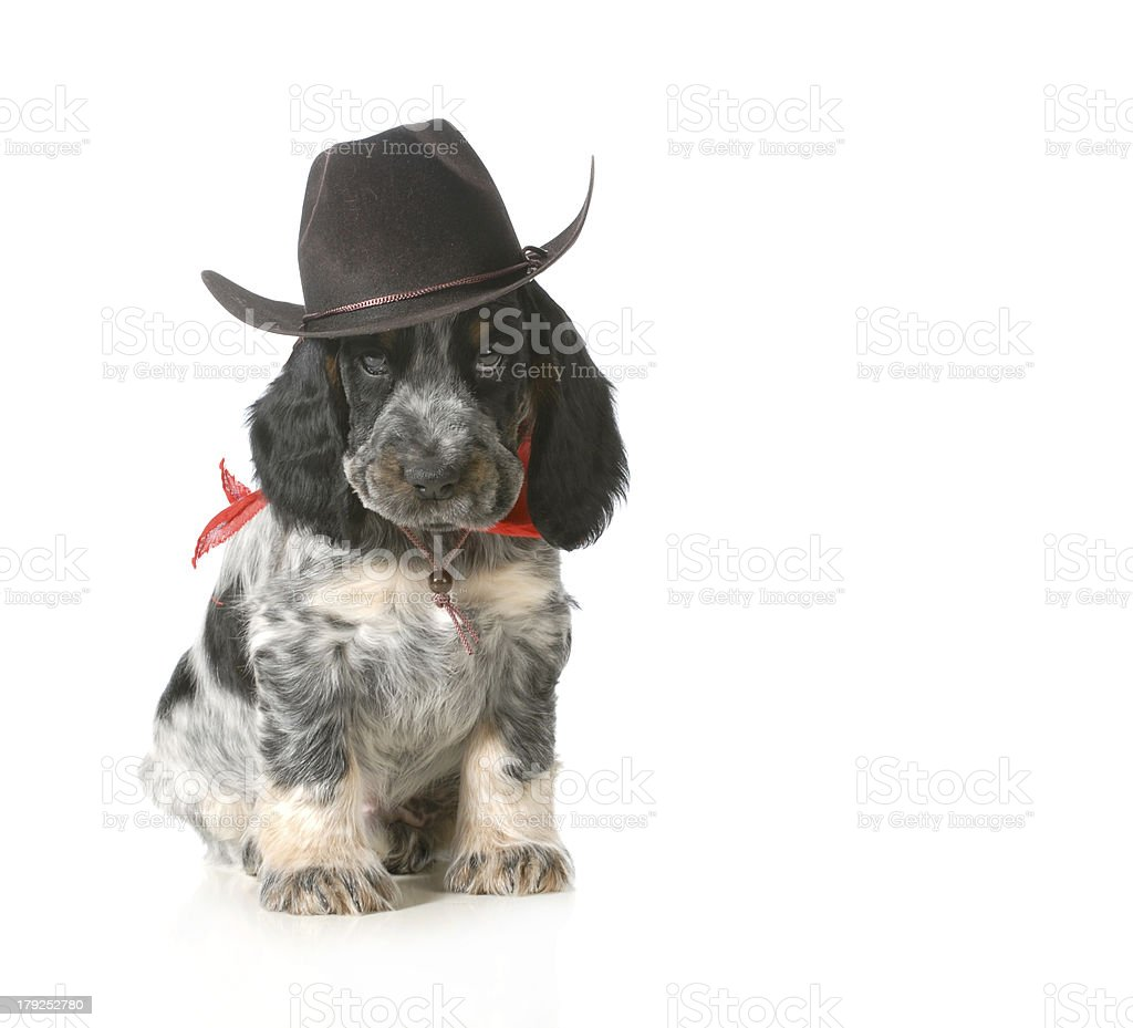 country dog royalty-free stock photo