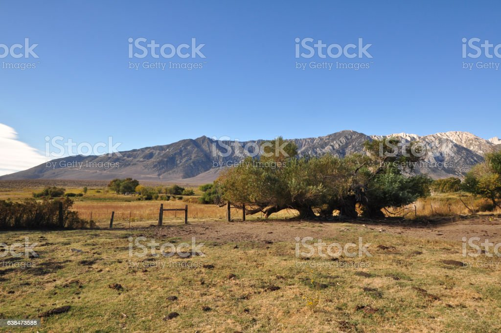 Country Field and Mountains stock photo
