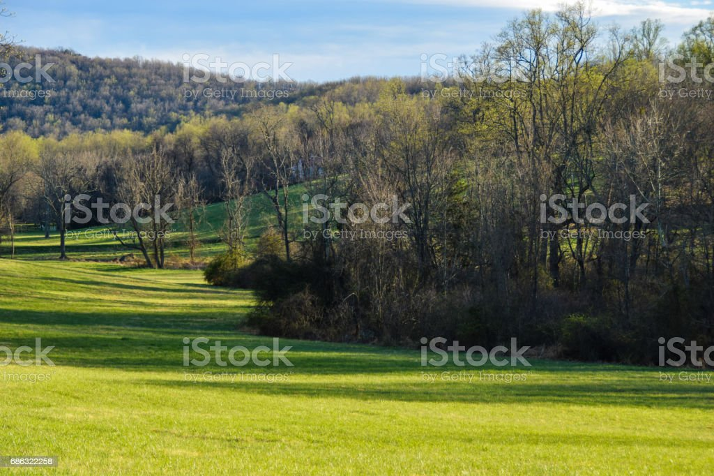 Country Field stock photo
