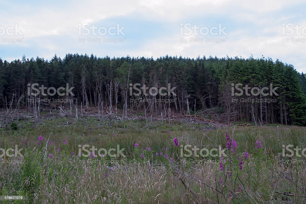Country Forrest Scene stock photo