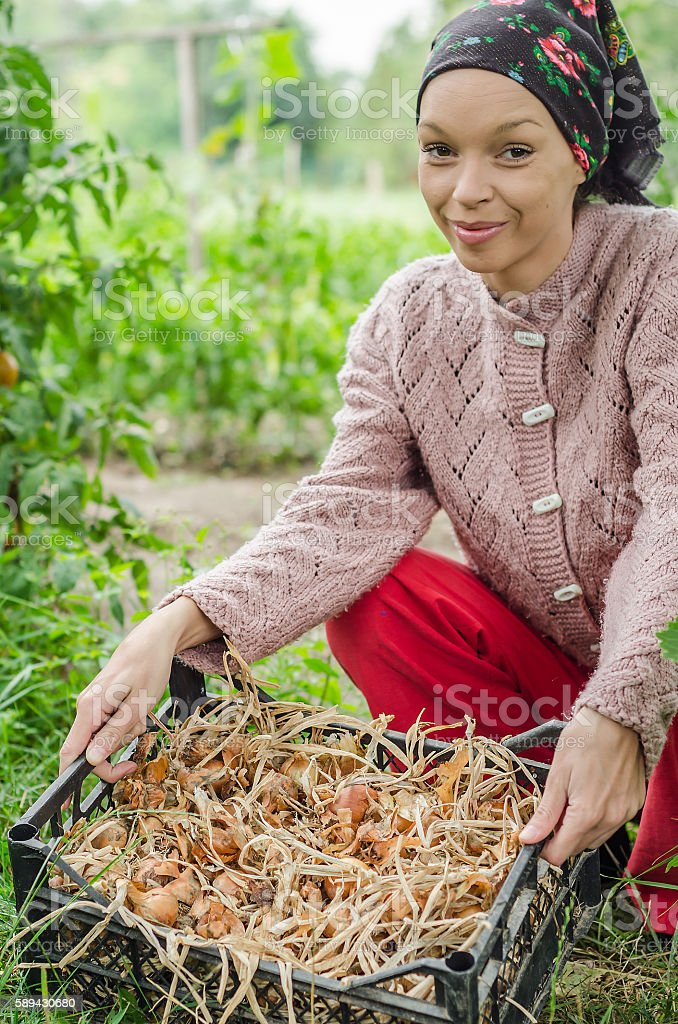 country girl holding basket with dried onions stock photo