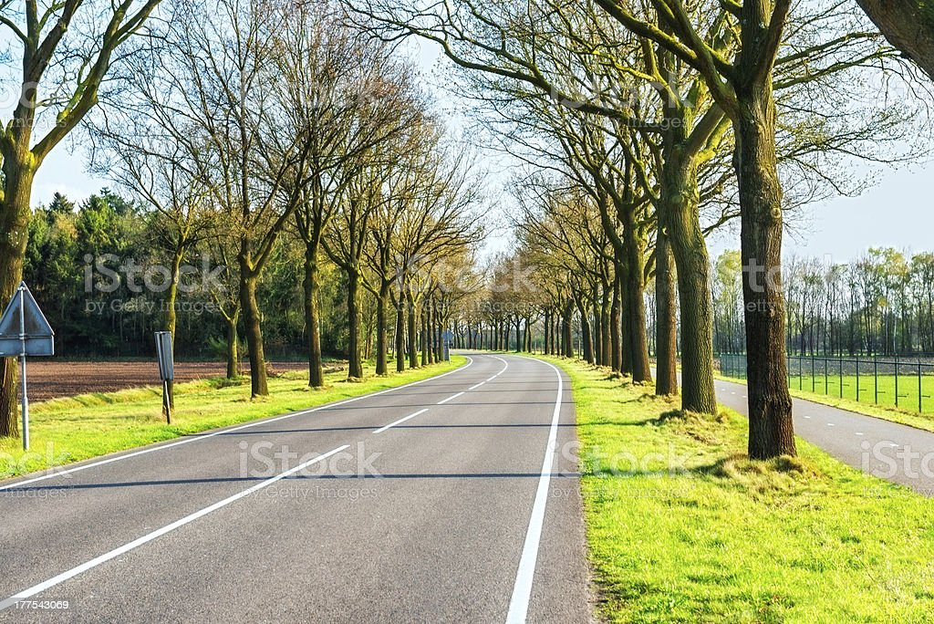 Country Highway Surrounded with Trees royalty-free stock photo