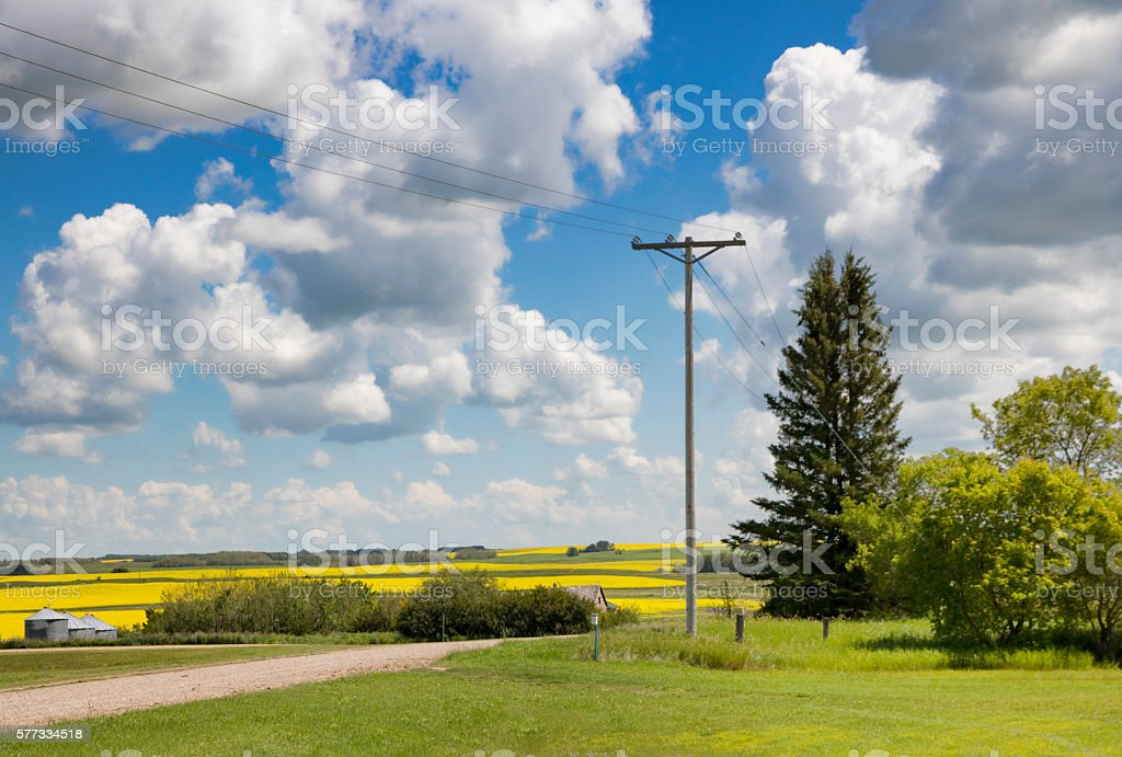 Country Landscape With Yellow Canola Fields stock photo