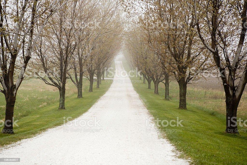 Country Lane - Horizontal royalty-free stock photo