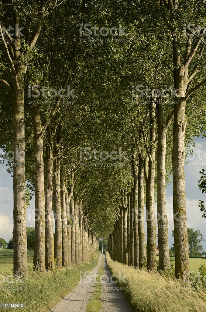 Country Lane in Flanders, Belgium stock photo