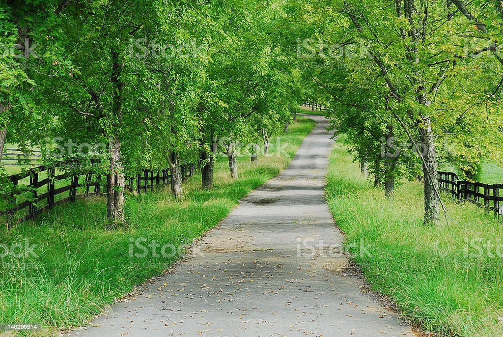 Country Lane in Spring royalty-free stock photo