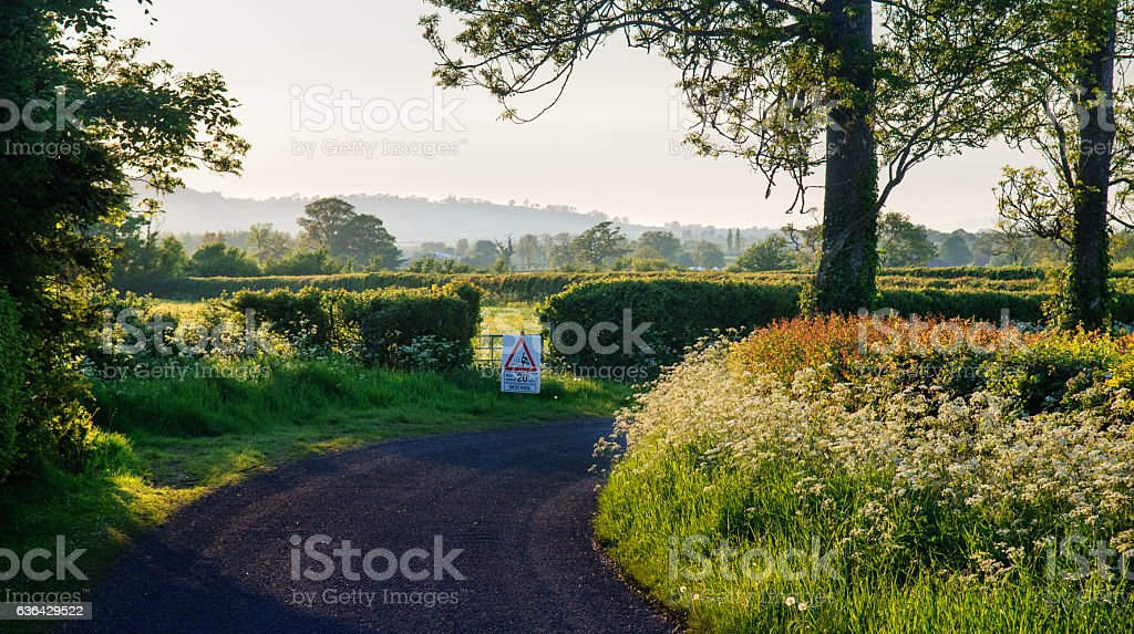 Country lane in summer stock photo