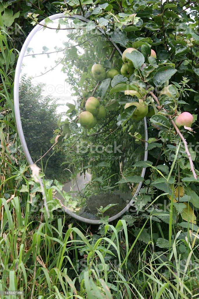 Country Lane Mirror stock photo