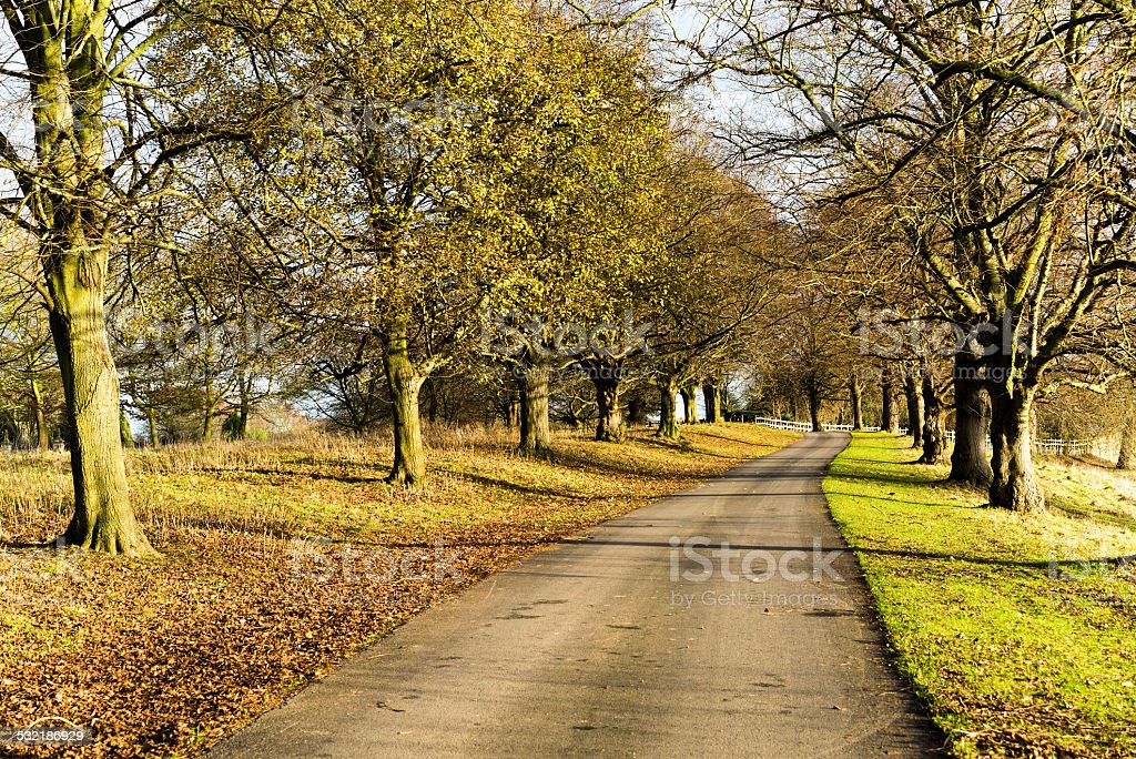 country lane stock photo