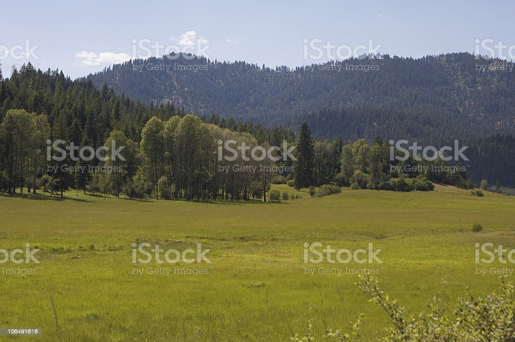 Country Meadow in the Summer stock photo