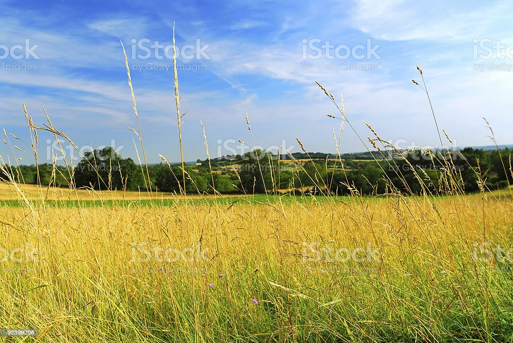 Country meadow landscape royalty-free stock photo