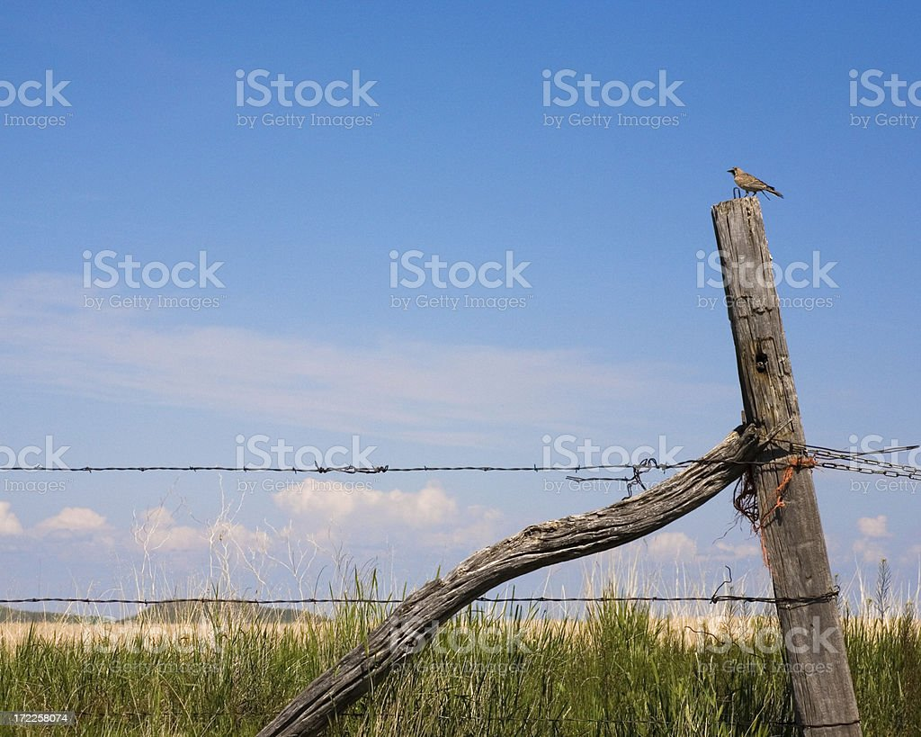 Country Meadowlark Bird On A Fence royalty-free stock photo