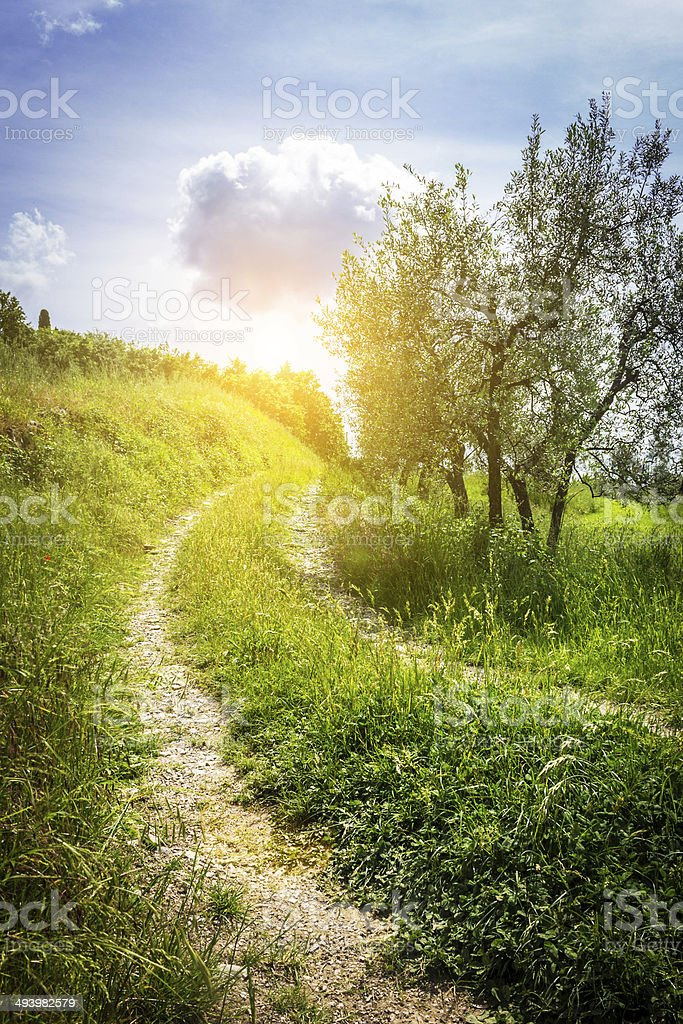 country path stock photo