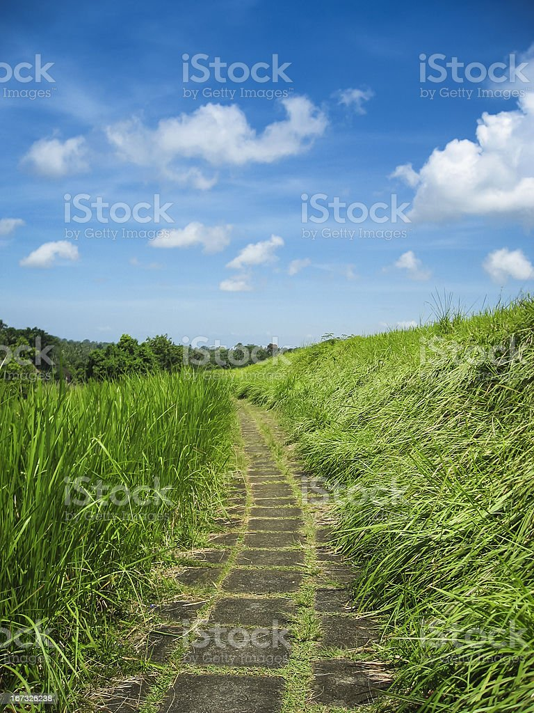 Country path ubud bali indonesia royalty-free stock photo